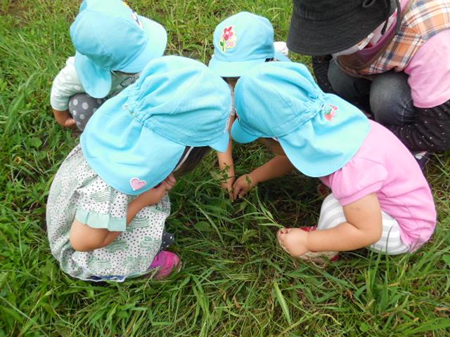 Niños loco sobre la búsqueda para el insecto