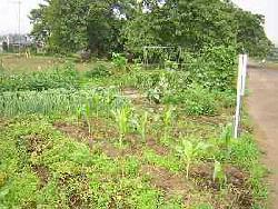 Fotografía 2 del padre y granja del niño