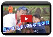 Padre y experiencia (28 de octubre, 2017 tenencia) de cosecha de batata de niño